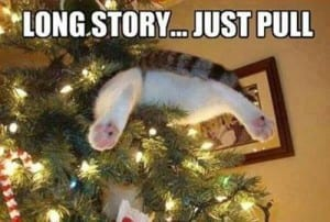 cat-in-tree