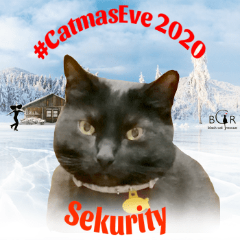 Sekurity @sisfurcats Ragamuffin