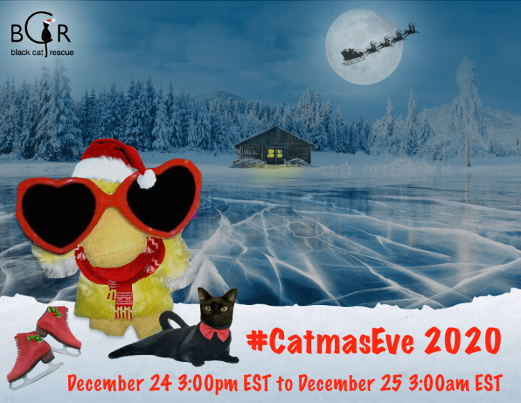 Welcome to #CatmasEve